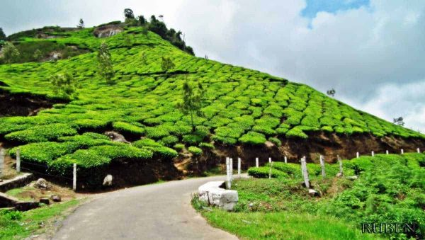 Kochi to Munnar tour packages.