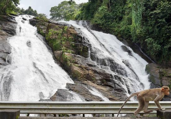 Chapra falls in Kerala tourist destination