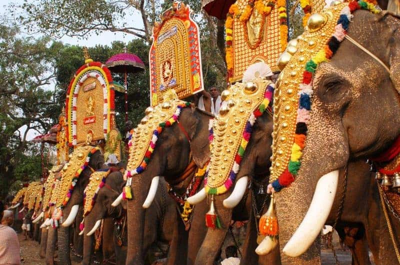 Thrissur Pooram closeup