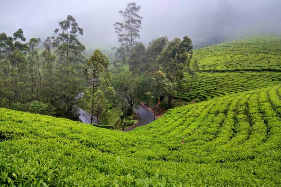 an amazing view point of tea plantation